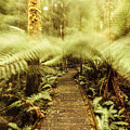 Rainforest Walk by Jorgo Photography - Wall Art Gallery