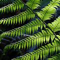 Rainforest Wonder by Renee Miller