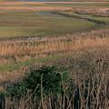 Rainham Marshes by Perggals - Stacey Turner