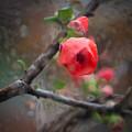 Raining Day Blossom  by Catherine Lau