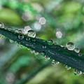 Rainy Days by Lauren Radke