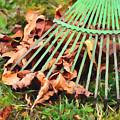 Raking The Fallen Autumn Leaves by Jeelan Clark