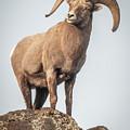 Ram Of The Rio Grande by Britt Runyon