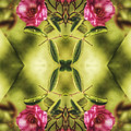 Rambling Rose  by Brenda Wilcox aka Wildeyed n Wicked
