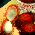 Rambutons by Richard Rochkovsky