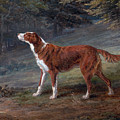 Ranger A Setter The Property Of Elizabeth Gray by George Garrard