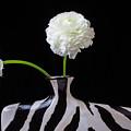 Ranunculus In Black And Whie Vase by Garry Gay