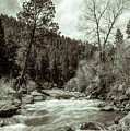 Rapids During Spring Flow On The South Platte River by Cary Leppert