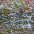 Rapids On The Petite Creuse At Fresselines, 1889 by Claude Monet