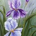Rapsody Iris by Marveta Foutch
