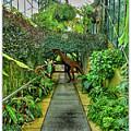 Raptor Seen In Kew Gardens by Lance Sheridan-Peel