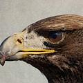Raptor Wild Bird Of Prey Portrait Closeup by Design Turnpike
