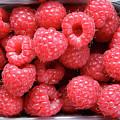 Rasberries Market Bergen by KG Thienemann