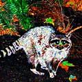 Rascally Raccoon by Will Borden