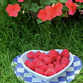 Raspberries And Impatiens by The Art of Alice Terrill