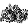 Raspberries Image by Irina Sztukowski