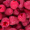Raspberry  by Anastasy Yarmolovich
