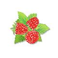 Raspberry Bunch  by Irina Sztukowski