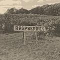 Raspberry Fields  by September  Stone