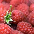 Raspberry by Lora Battle