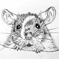 Rat Sketch by Susan Paquette