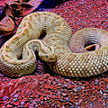 Rattlesnake In Abstract by Kristalin Davis
