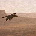 Raven 1 by David Halperin