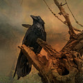Raven Lover by Vicki Stansbury