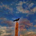 Raven Pole by Jan Amiss Photography