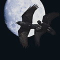 Ravens Of The Night by Wingsdomain Art and Photography