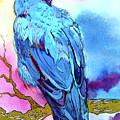 Raven's Sight by Jo Lynch