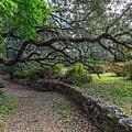 Ravine Gardens Trail by John Zawacki