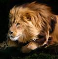 Raw Lion Power by Julie L Hoddinott
