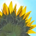 Ray Of Sunflower by Honey Behrens