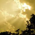 Rays Of Glory by Trish Tritz