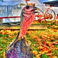 Razorheaded Turkey by Sam Davis Johnson