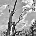 Reach High by Lisa Renee Ludlum