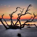 Reaching Driftwood Beach Sunrise Jekyll Island Georgia Art by Reid Callaway