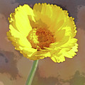 Reaching For The Sun by Christina Boggs
