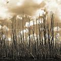 Reaching To The Sky by Gary Dean Mercer Clark