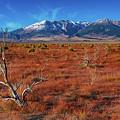 Read Fields Eastern Sierra by Javier Flores