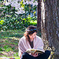 Reading Beneath The Cherry Blossoms by SR Green