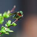 Ready For Take-off by Sandra Updyke