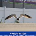 Ready Set Soar by Robert Banach