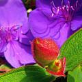 Ready To Bloom by Jerome Stumphauzer