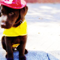 Fire Pup Ready To Roll by Toni Hopper