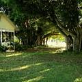 Real Florida Yard by Charles Peck