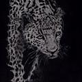 Realistic Cheeta by Chethan Kumar KM