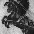 Rearing Horses by Eric Fan