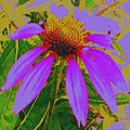 Recolored Echinacea Flower by Cindy Gacha